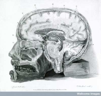 L0000838 Section of the brain, 19th century.